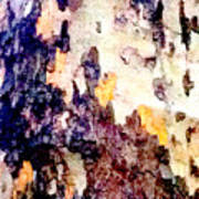 Tree Bark 2 Art Print