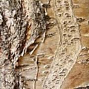Tree Bark 9 Art Print