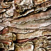 Tree Bark Abstract Art Print