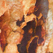 Tree Bark Collection # 50 Art Print