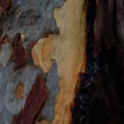Tree Bark Collection # 52 Art Print