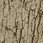 Tree Bark Texture Brown Art Print