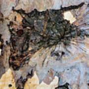 Tree Barks Pattern #13 Art Print