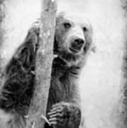 Tree Bear Art Print