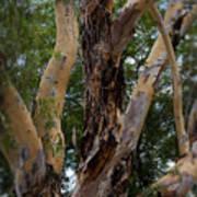 Tree Branch Texture 1 Art Print
