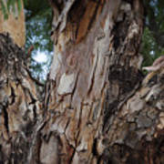 Tree Branch Texture 3 Art Print