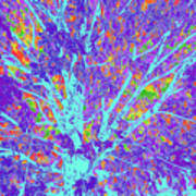 Tree Branches 10 Art Print