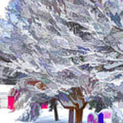 Tree Branches Covered By Snow  Art Print