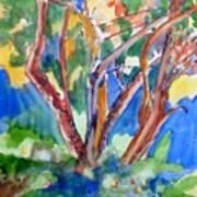 Tree Burst Art Print