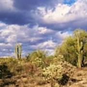 Tree Cactus Art Print