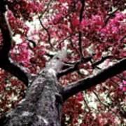 Tree Canopy Red Art Print