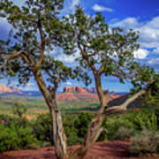 Tree Captures Sedona Art Print