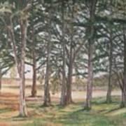 Tree Collection Art Print