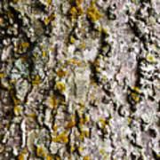 Tree Trunk Detail Art Print
