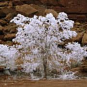 Tree During Winter Inversion Art Print