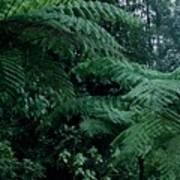 Tree Ferns Art Print