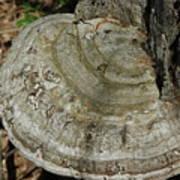 Tree Fungi Art Print