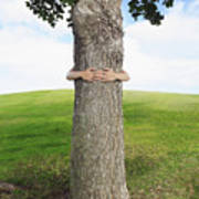 Tree Hugger 3 Art Print
