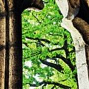 Tree In A Medieval Frame Art Print