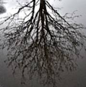 Tree In A Puddle Art Print