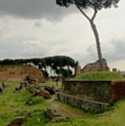 Tree In Ancient Rome Landscape Art Print