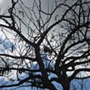 Tree In Benalmadena Art Print
