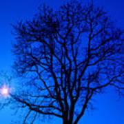 Tree In Blue Sky Art Print