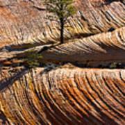 Tree In Flowing Rock Art Print