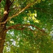 Tree In Late Summer Art Print