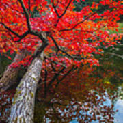 Tree In The Pond Art Print