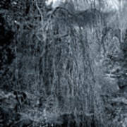 Tree In Winter Art Print