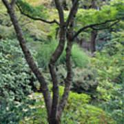 Tree Japanese Garden Art Print