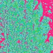 Tree Leaves G Art Print