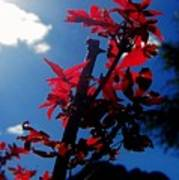 Tree Leaves Red 061814a Art Print