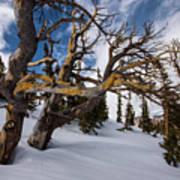 Tree Life In Winter Art Print