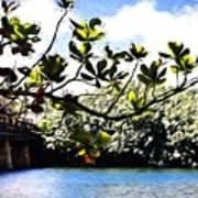 Tree Limb Over Water 2 Art Print