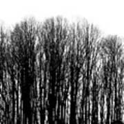 Tree Lined Art Print