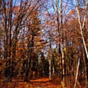 Tree Lined Path Art Print