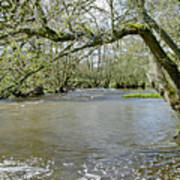 Tree-lined - Swollen River Dove At Thorpe Art Print