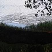 Tree Near The Water Art Print