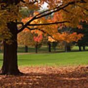 Tree Of Fall Autumn Colors Art Print