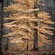 Tree Of Gold Art Print