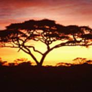 Tree Of Life Africa Art Print