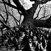 Tree Of Thorns B Art Print