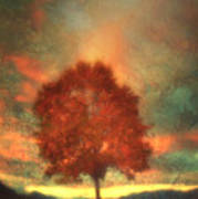 Tree On Fire Art Print