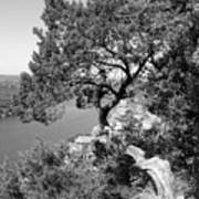 Tree On Mount Bonnell Art Print