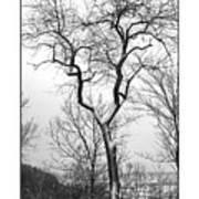 Tree On The Western Promenade Art Print