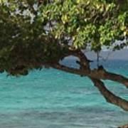 Tree Over Sapphire Beach Art Print