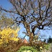 Tree Photo 993 Art Print