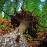 Tree Root Ball Art Print